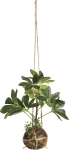 Artificial Botanical Dwarf Umbrella Hanging Plant 14 Inch from Primitives by Kathy